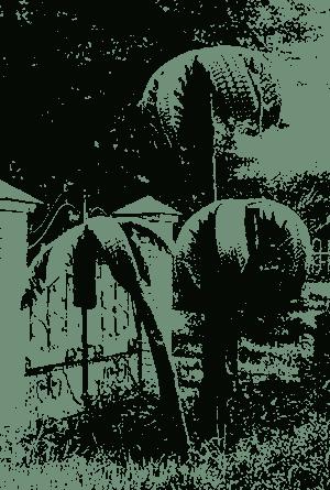 Пальма из старых покрышек своими руками